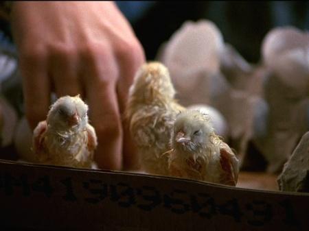 3-19-Chicks