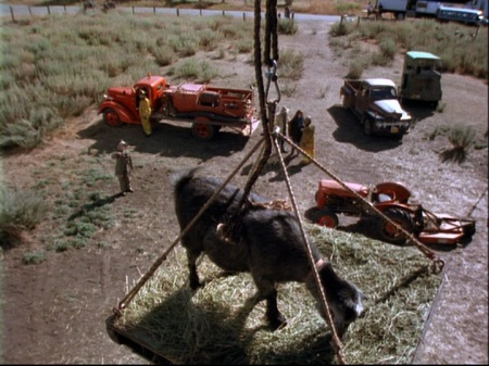 5-7-ruth-anne-rescuing-goat