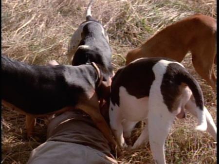 6-3-dogs-ed01
